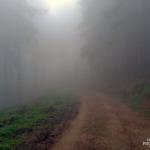 Nebel Ilsetal Ilsefälle im Harz