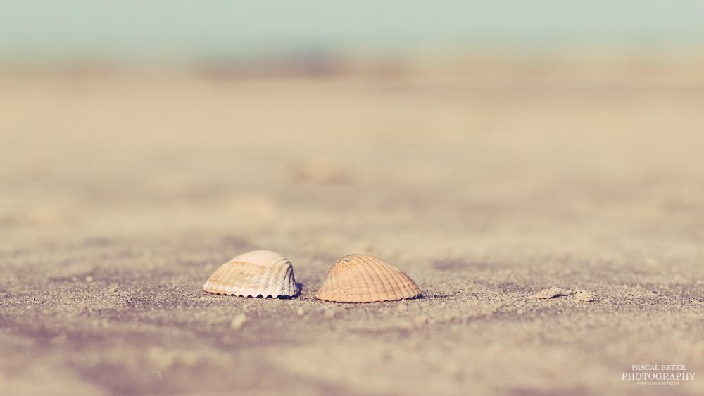 muscheln am strand st peter-ording